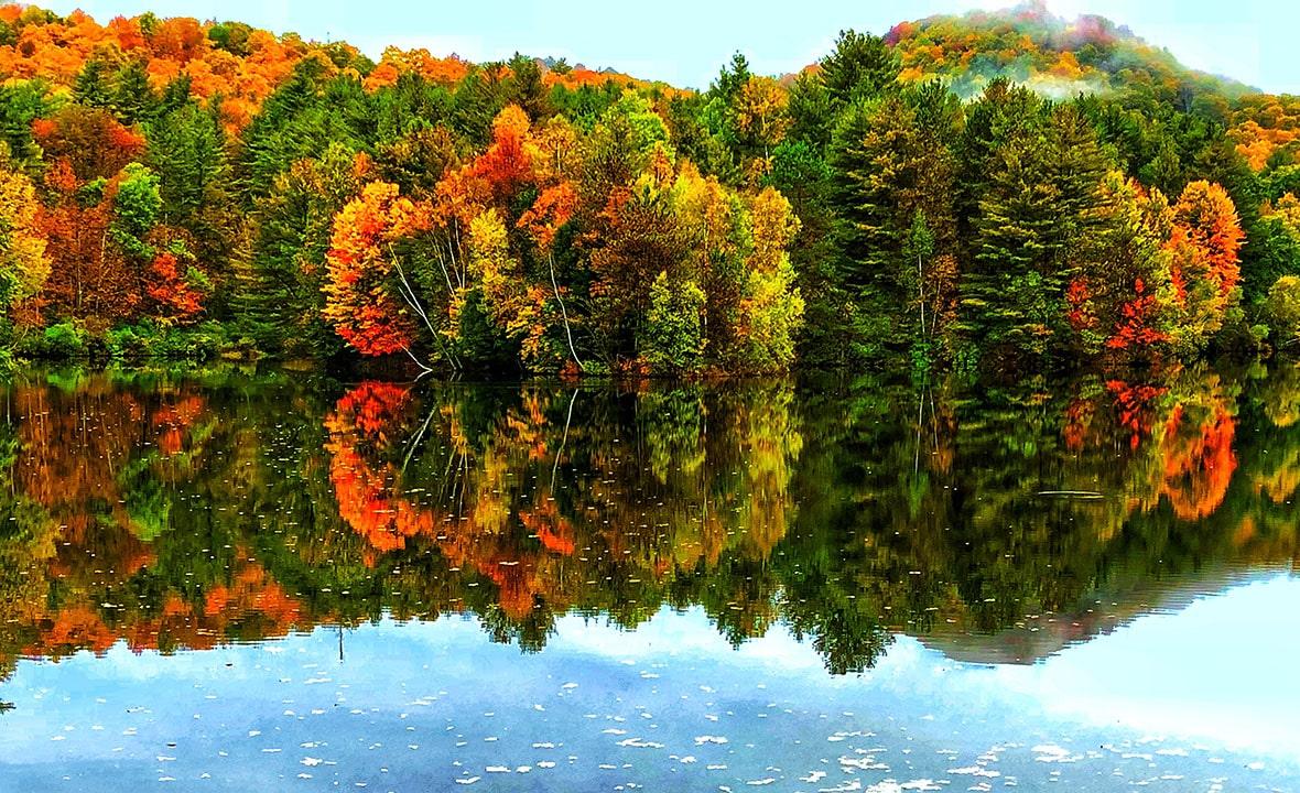 Vermont Automn Forest